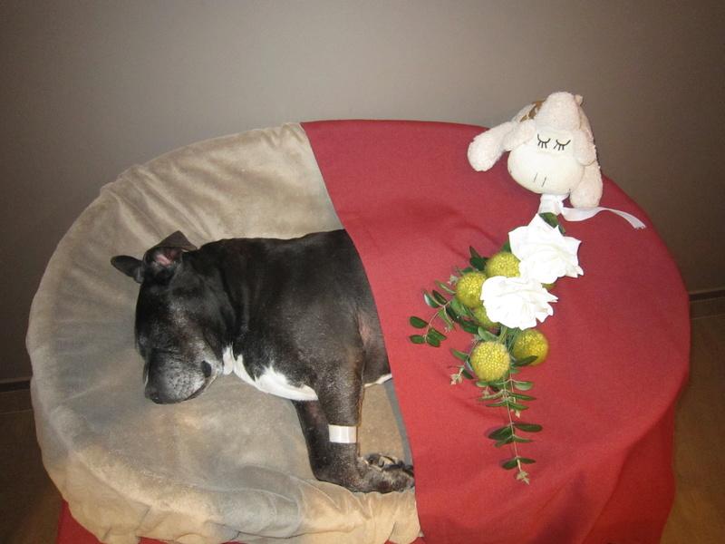 Le décès de son chien Img_6410