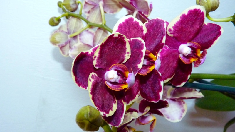 INSCRIPTIONS - Catégorie Acquise en fleurs - Mars 2017 P1120228