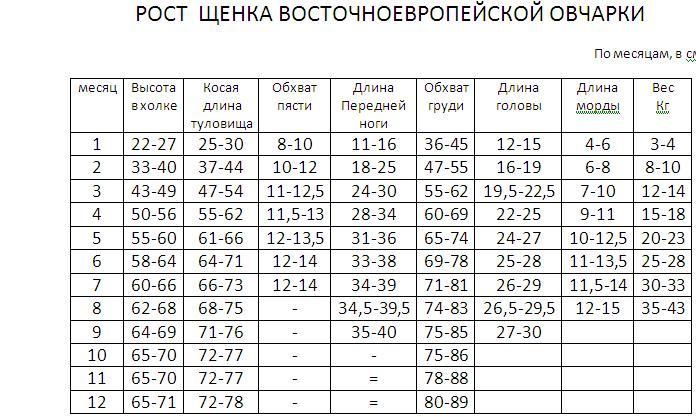 Таблица роста и веса щенка ВЕО от 1-го до 12 месяцев. 48383610