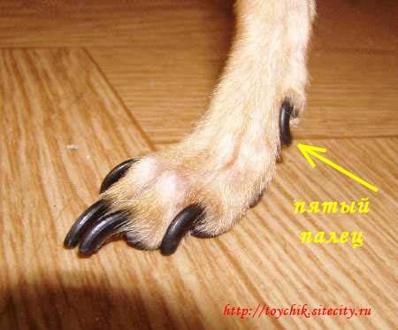 Обрезаем когти собакам  Ltext_10