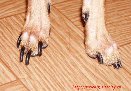 Обрезаем когти собакам  Ltext_14