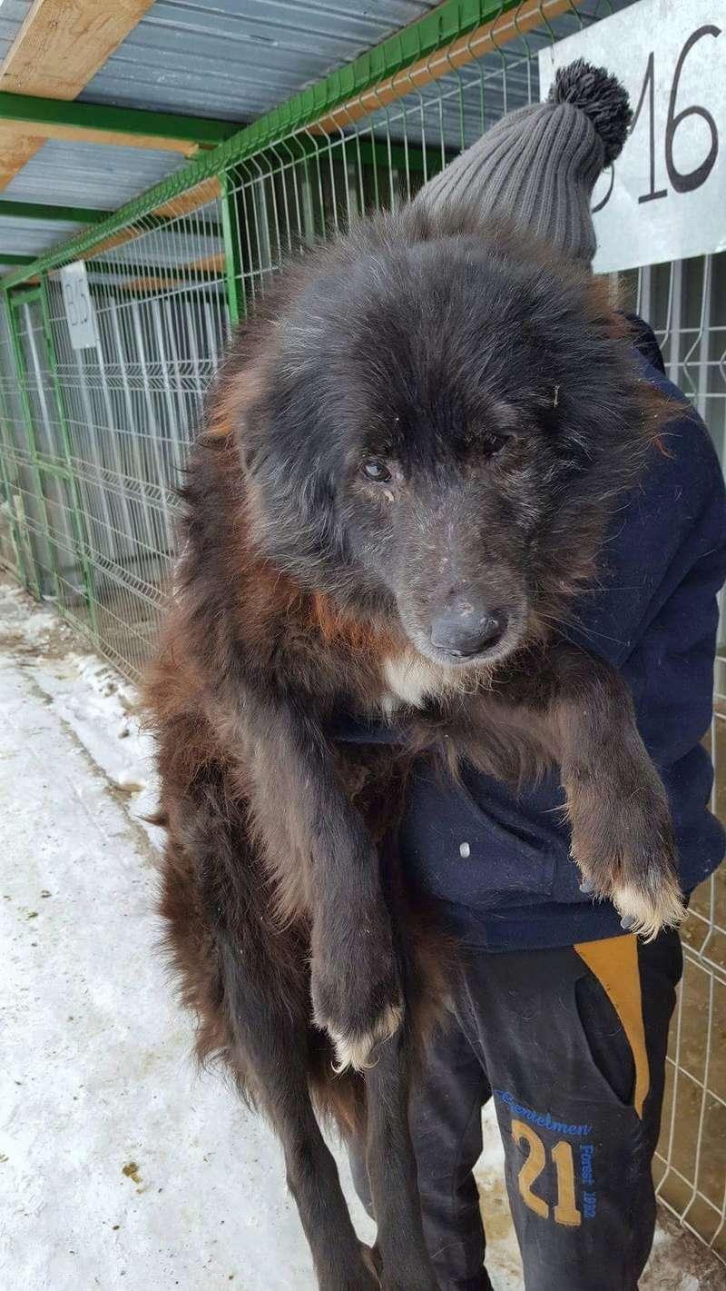 MOISE, mâle, taille moyenne, né environ en 2002 (Pascani) - REMEMBER ME LAND. Adopté par Sophie (depart Corse) Receiv21