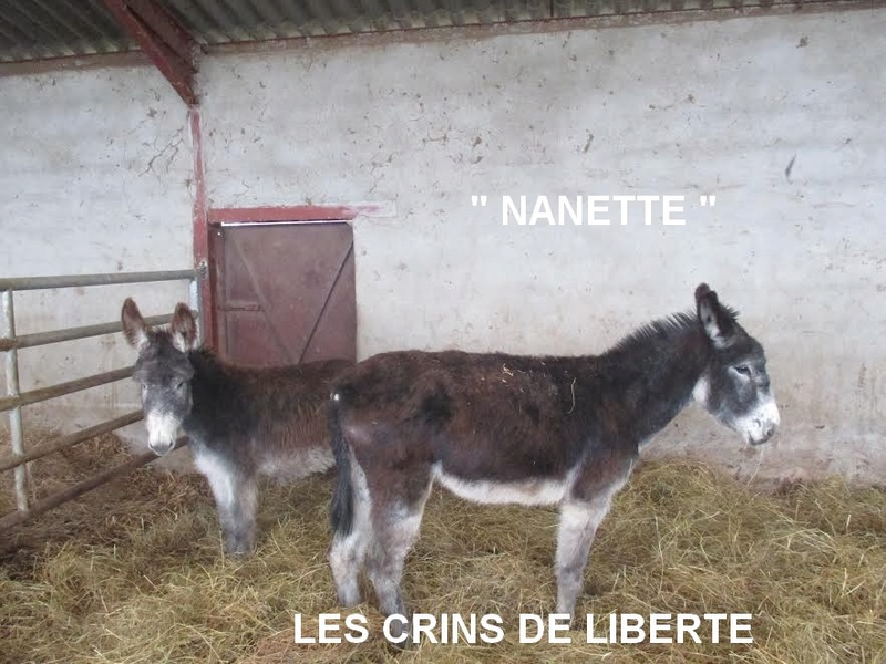 (Dept 71) Cookie (dcd), Guizmo et Lucie -ânes - Sauvées par Valérie L. (2017) Unnam195