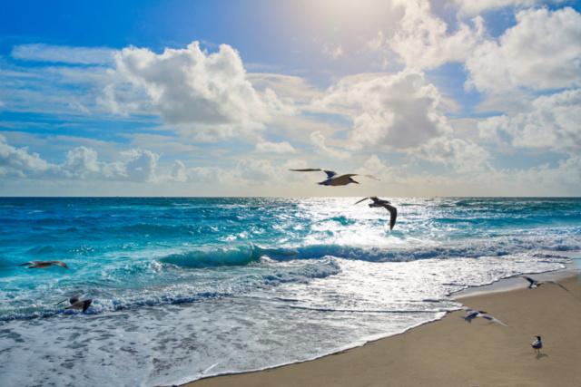 Une mystérieuse Croix de bois sur une plage de Floride  Croix_11