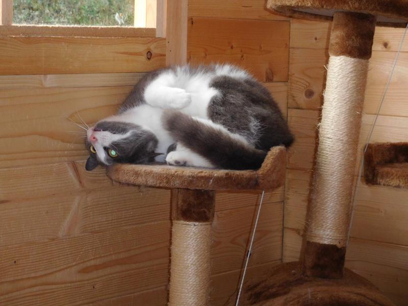 CERISE, chatte grise et blanche Dscn7410
