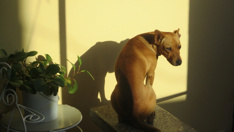 La gent canine  Img_4215
