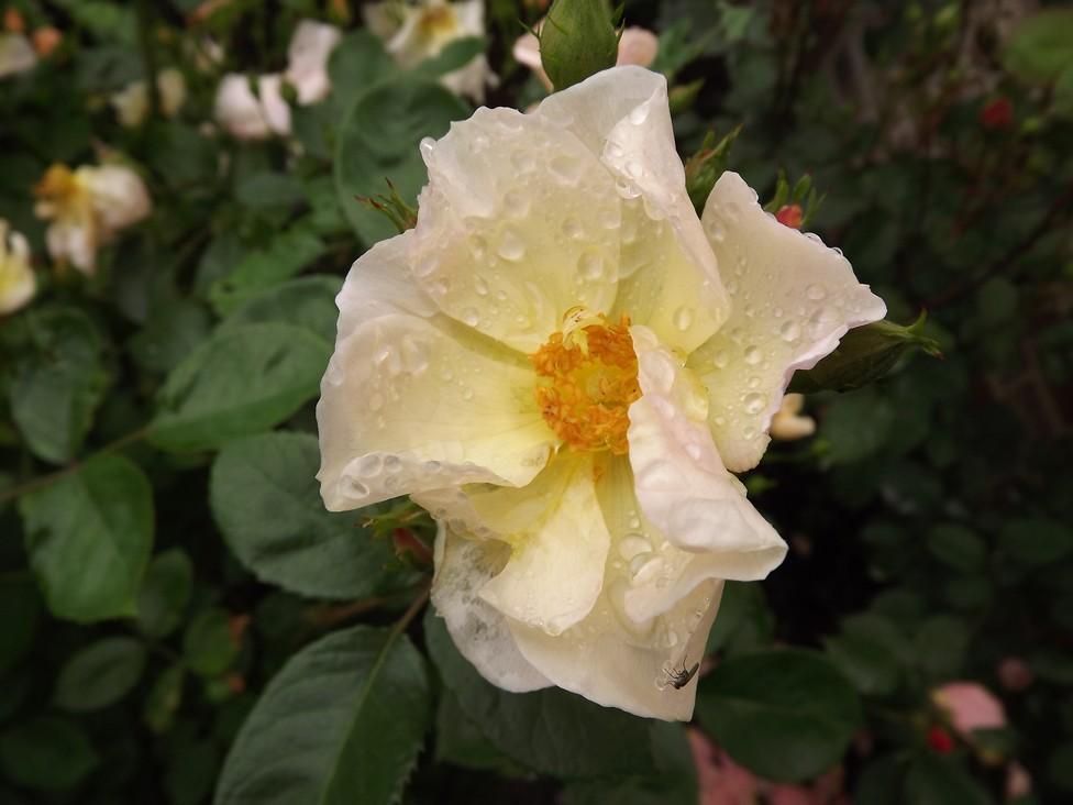 Souvenir de Rose-Marie Dscf5014