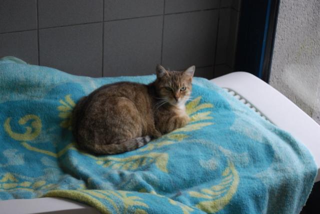 Savane, chatte tigrée Dsc_7814