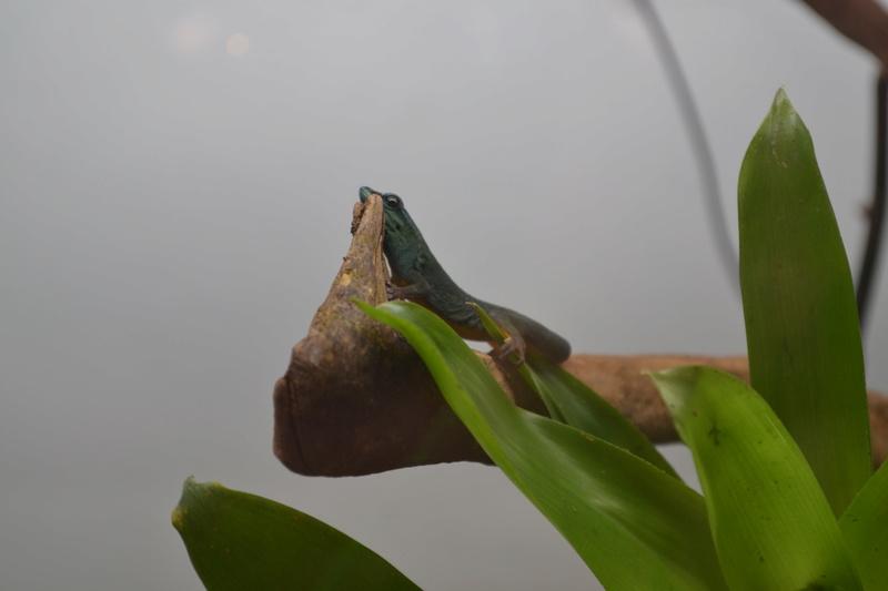 Terrarium pour Lygodactylus williamsi Dsc_0210