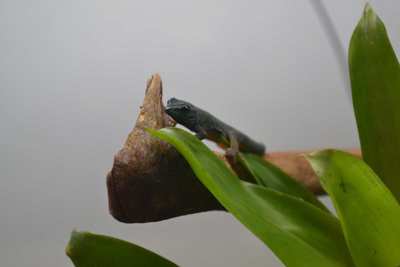 Terrarium pour Lygodactylus williamsi Dsc_0211