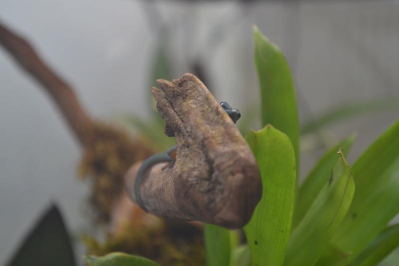 Terrarium pour Lygodactylus williamsi Dsc_0212