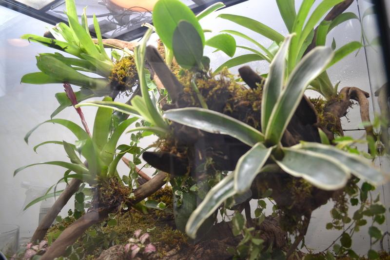 Terrarium pour Lygodactylus williamsi Versio11