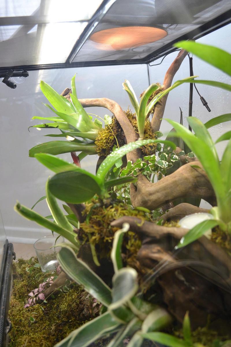 Terrarium pour Lygodactylus williamsi Versio13