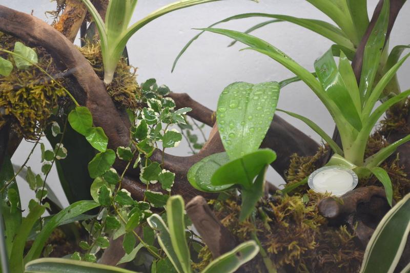 Terrarium pour Lygodactylus williamsi Versio14