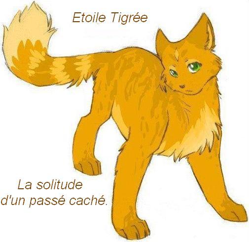 Liens d'Etoile Tigrée 5_bhe613