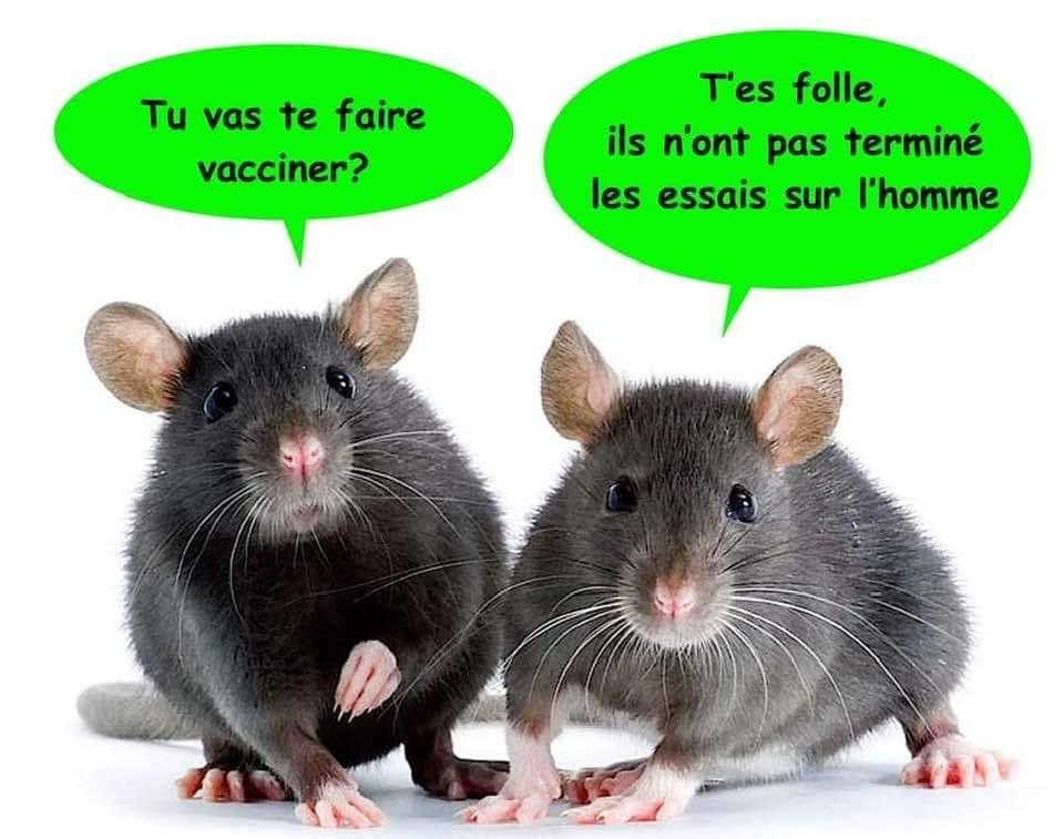 La vaccination - Page 5 Covid10