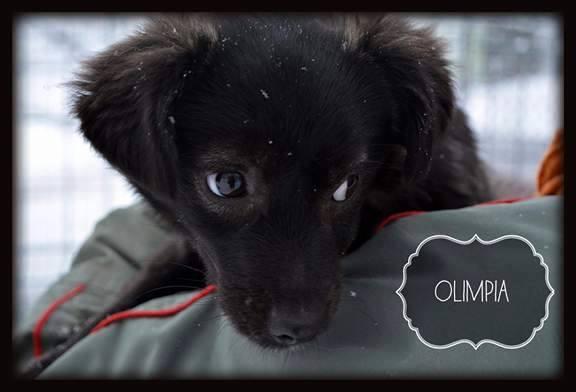 OLYMPIA , née en 2016 - ( Clinique vétérinaire d'Emma à Lasi ) - Réservée adoption par Delphine P. (Belgique)  Ol310