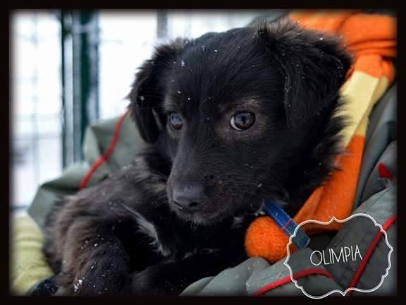 OLYMPIA , née en 2016 - ( Clinique vétérinaire d'Emma à Lasi ) - Réservée adoption par Delphine P. (Belgique)  Ol410