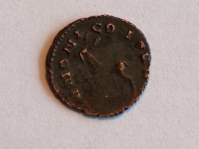 Identification romaine 17 17 Salonina COR SALONINA AVG IVNON 17f10