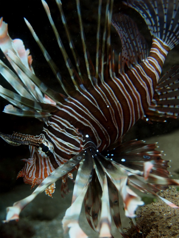 Mayotte  P6240211