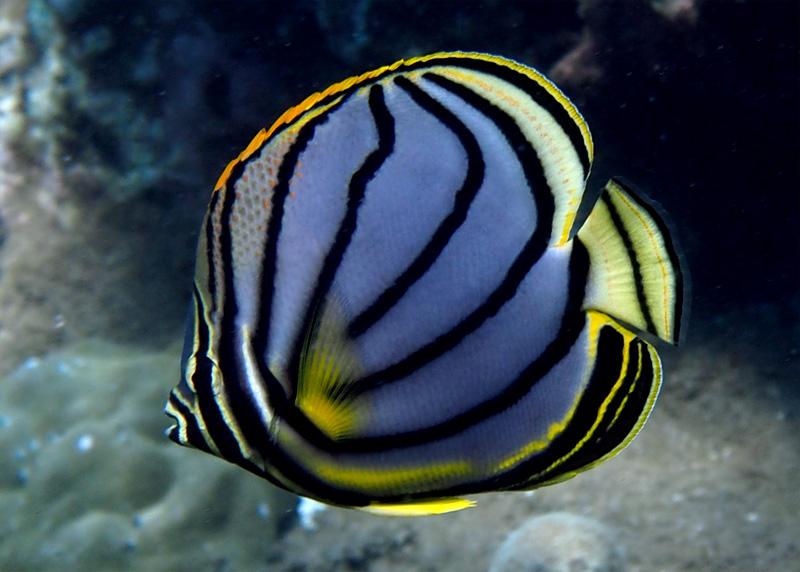 Mayotte  P7070111