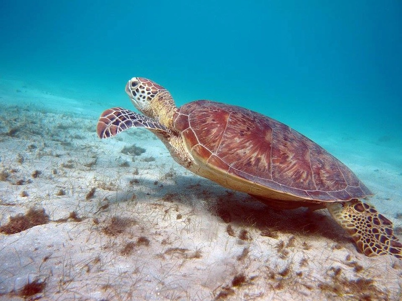Mayotte  Tortue12