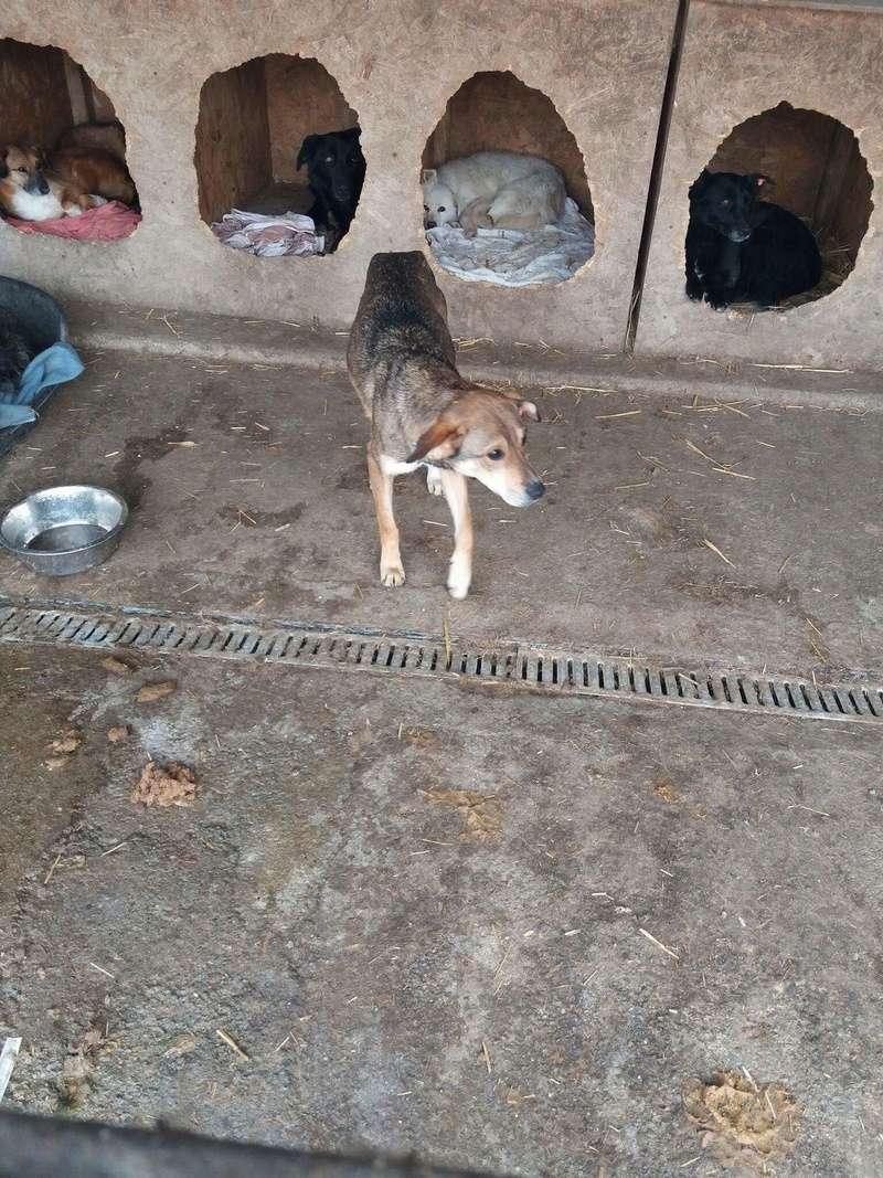 NAGA, F-X, taille moyenne, née 2014 environ (TAMARA) - Prise en charge refuge ELLEN (Allemagne) Fb_im204