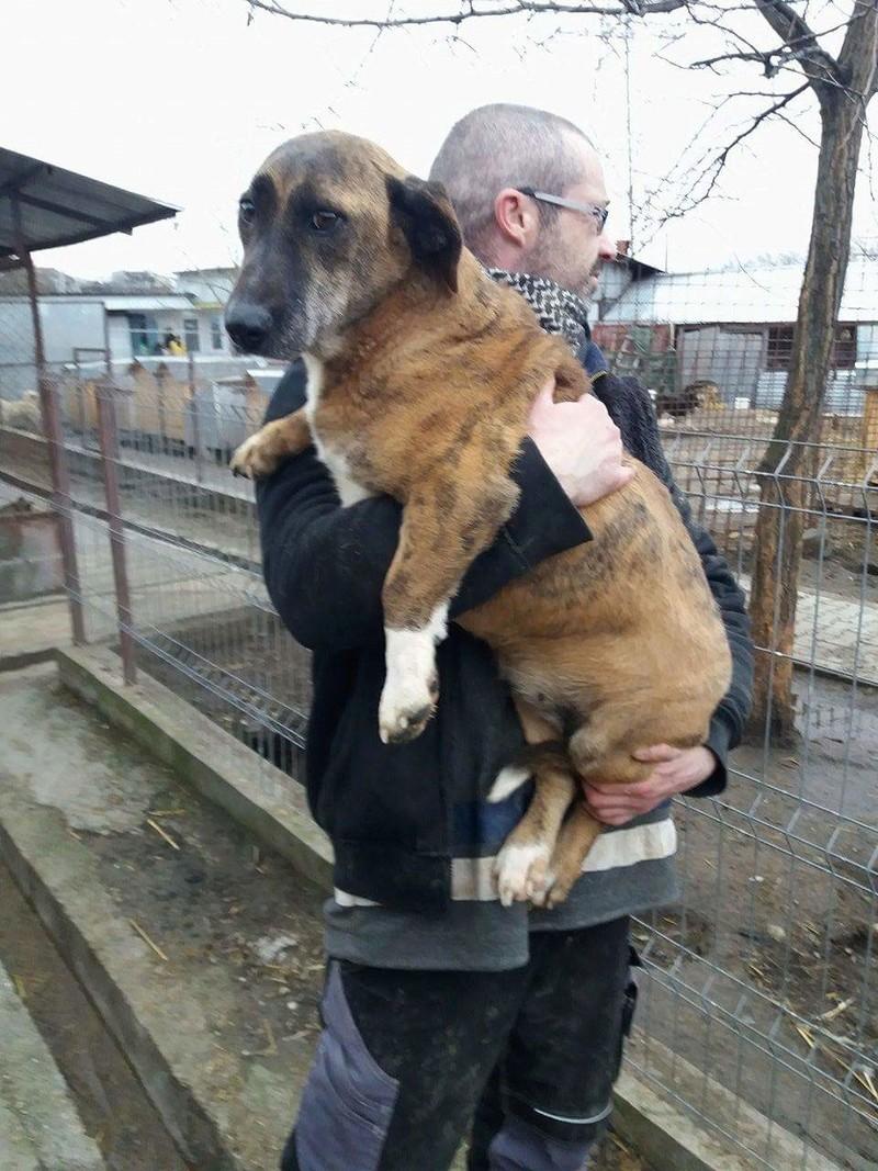 MOKA, F-X taille moyenne (15kg), née 2011 (TAMARA-FOURRIERE) Prise en charge Refuge Jouvence Recei112
