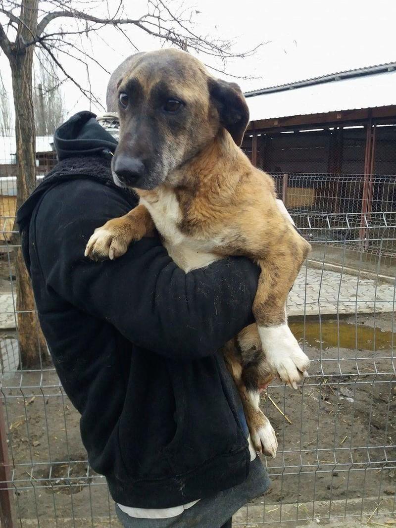 MOKA, F-X taille moyenne (15kg), née 2011 (TAMARA-FOURRIERE) Prise en charge Refuge Jouvence Recei113