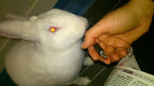 [ADOPTE] Dexter, lapin réhabilité de laboratoire 59562010