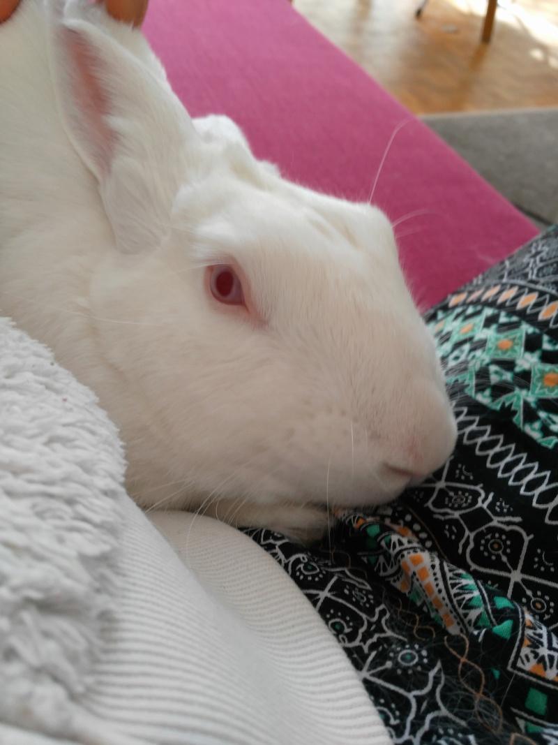 [DECEDE] Django, jeune lapin de laboratoire 76314710