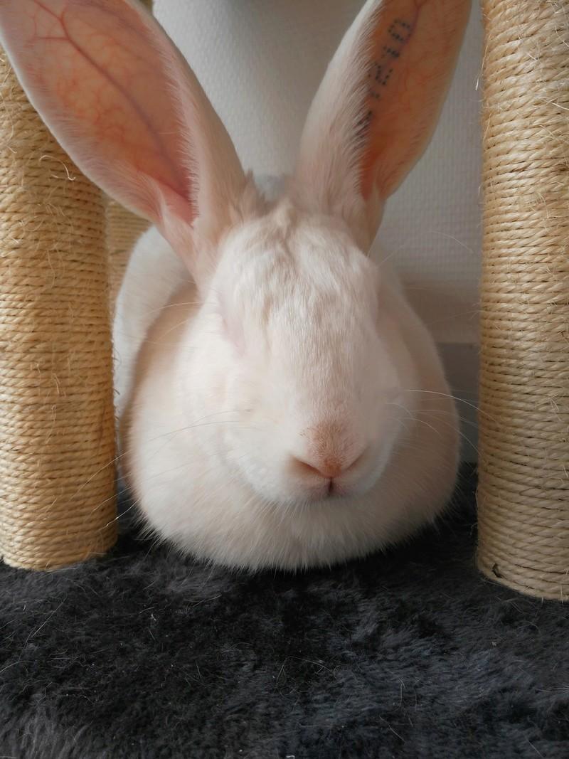 [DECEDE] Django, jeune lapin de laboratoire 99381910