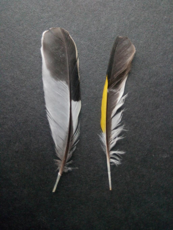 Petite plumes Img_2030