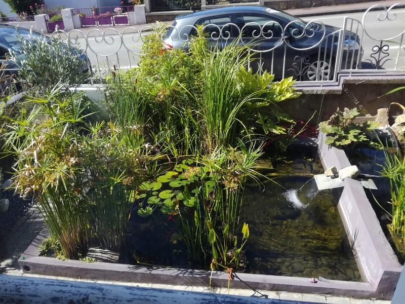 Projet de bassin Img_2044