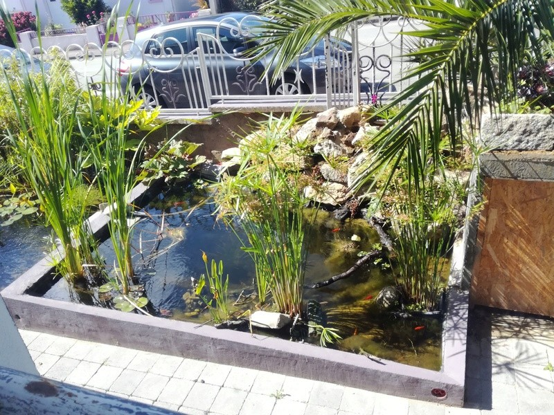 Projet de bassin Img_2045