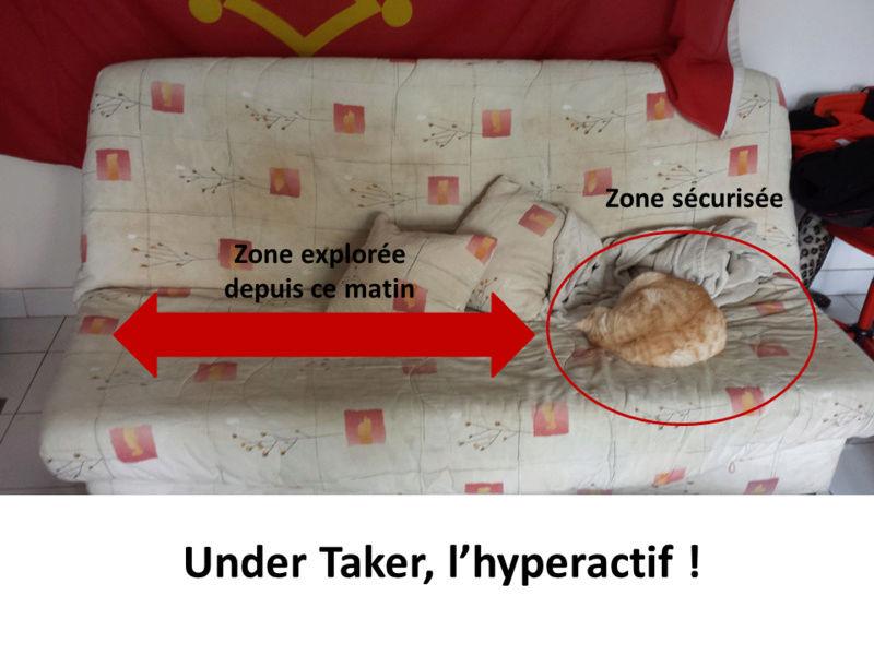 under taker - UNDER TAKER FIV+insuffisance rénale Ut10