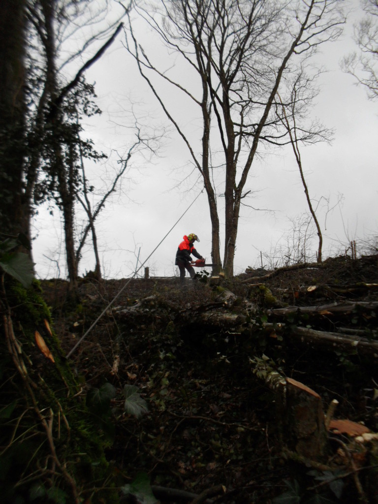 mon 421 forestier - Page 5 Sam_4811