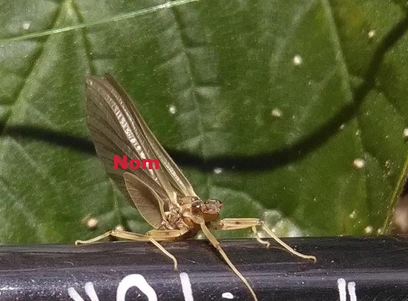 Photos d'insectes  - Page 9 Mouche10