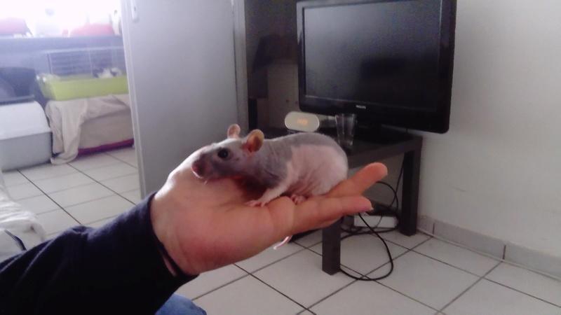 My « Little Monster » Dsc_0111