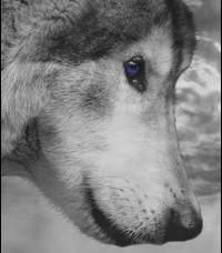 Loup Sauvage Riviyr11