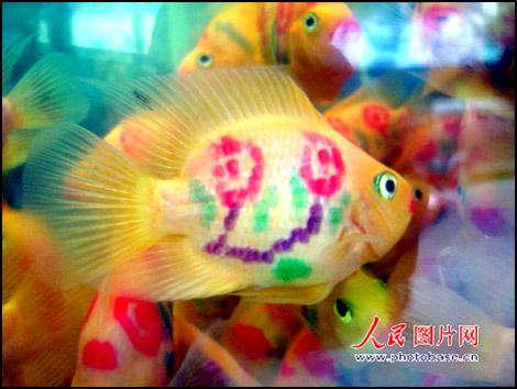 Pimp your fish Img_1623