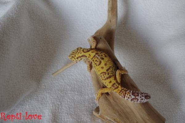 Mon cheptel de Gecko Imgp5711