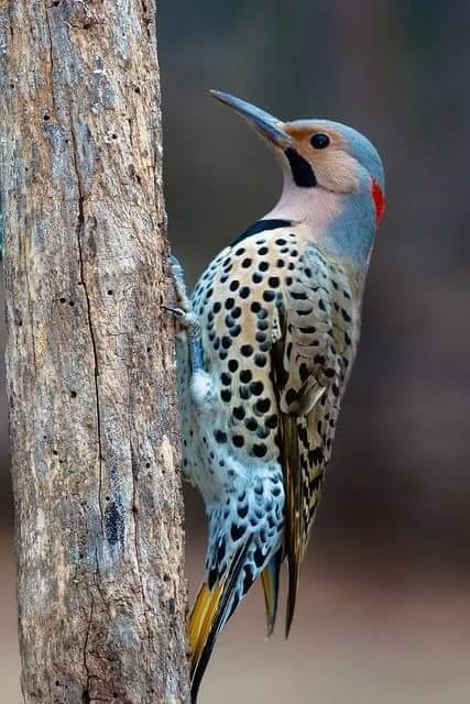 la nature, les oiseaux, le bonheur des yeux Fb_img10
