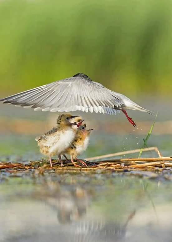 la nature, les oiseaux, le bonheur des yeux Fb_img11