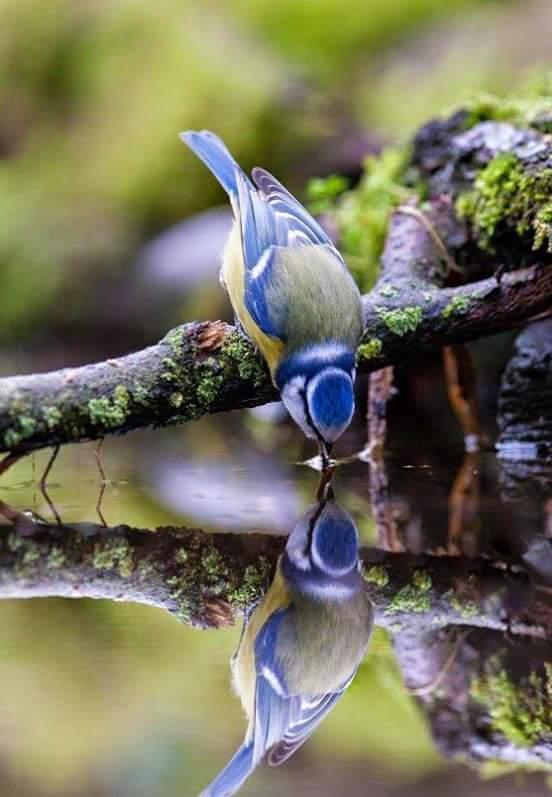 la nature, les oiseaux, le bonheur des yeux Fb_img12