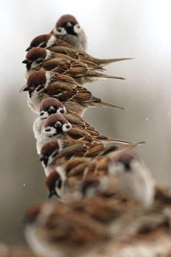 la nature, les oiseaux, le bonheur des yeux Fb_img13