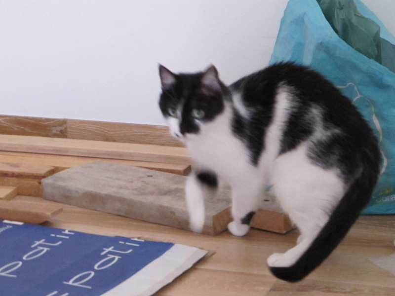 MILA chatte née 2015 - ORASTIE/RUE - Sauvée de la tempête de neige -Réservée fa Nathalie (67)- Img_6832