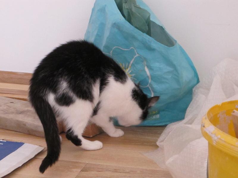 MILA chatte née 2015 - ORASTIE/RUE - Sauvée de la tempête de neige -Réservée fa Nathalie (67)- Img_6834