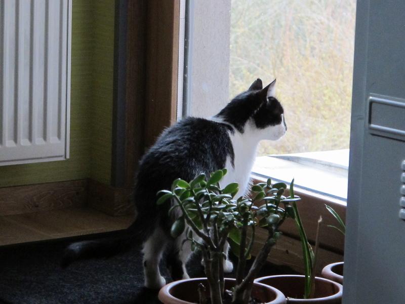 MILA chatte née 2015 - ORASTIE/RUE - Sauvée de la tempête de neige -Réservée fa Nathalie (67)- Img_6842