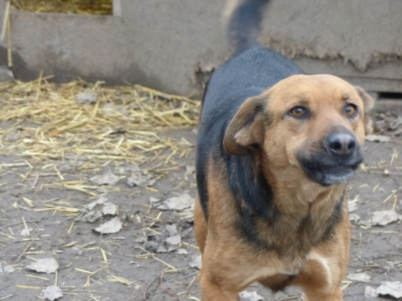 JELLY (ex JERRY) F-X, taille moyenne, env. 20 kg, née 2011 (BACKA) - Prise en charge SPA Pontarlier Jerry11
